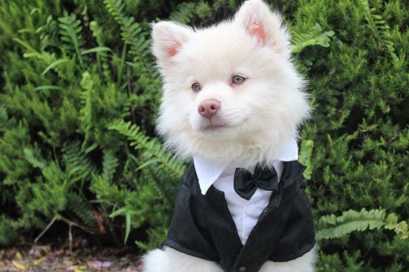 Should You Include Your Pet in Your Wedding?